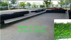 梧州人造草坪 装车材料进场